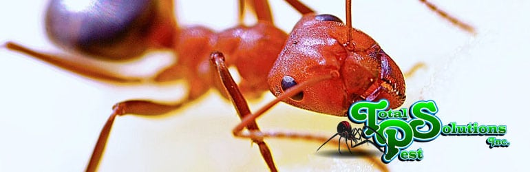 Ant Control: How To Keep Ants Out Of Your Kitchen