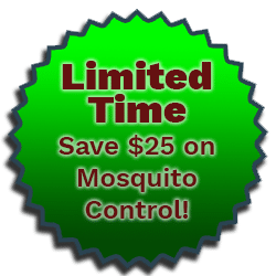 mosquito-promo
