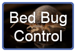 bed-bug